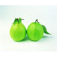i-Guava - 中山月芭