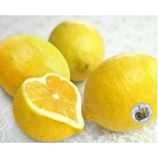 i-Lemon of Japan