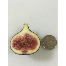 Fig (South Africa) 160g