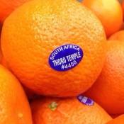 i-Tangerine