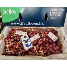i-Vitis Vinifera Seedless Grape (Box)