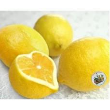 i-Lemon of Japan