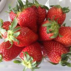 Korea Strawberry